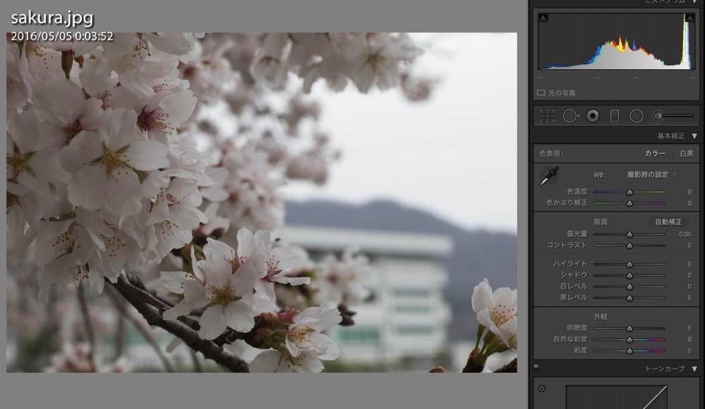 桜の写真をキレイなピンク色に補正する方法