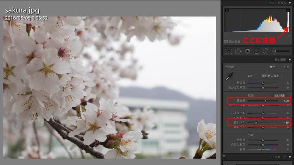 Sakura retouch 02