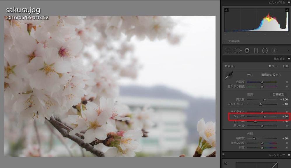 Sakura retouch 04