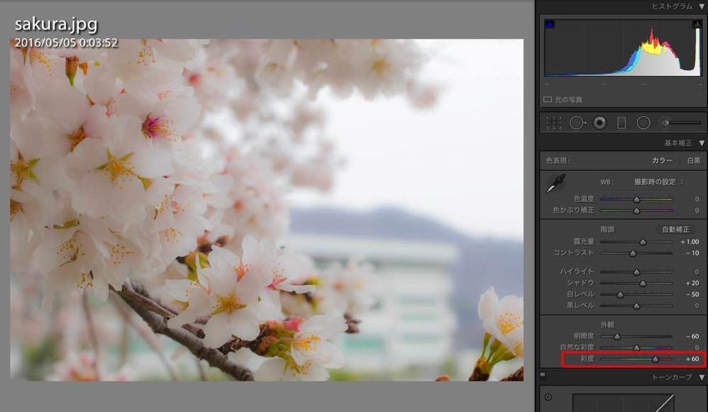 Sakura retouch 05