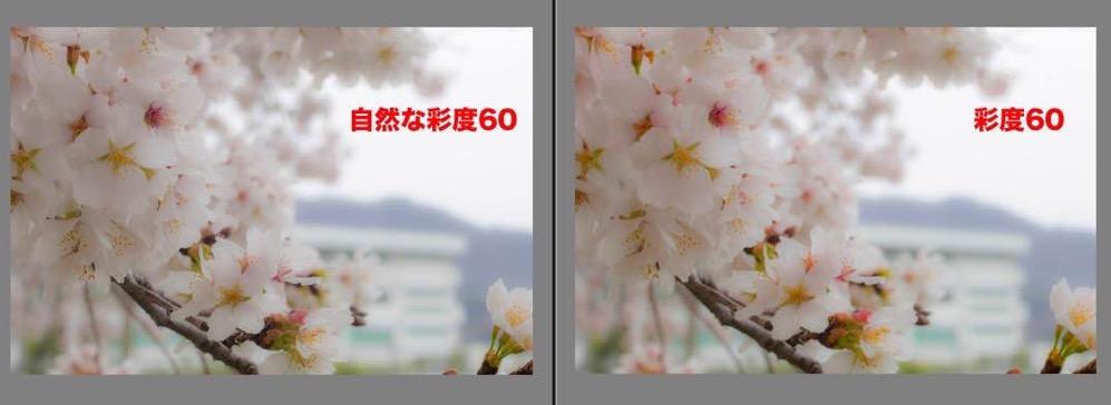 Sakura retouch 07