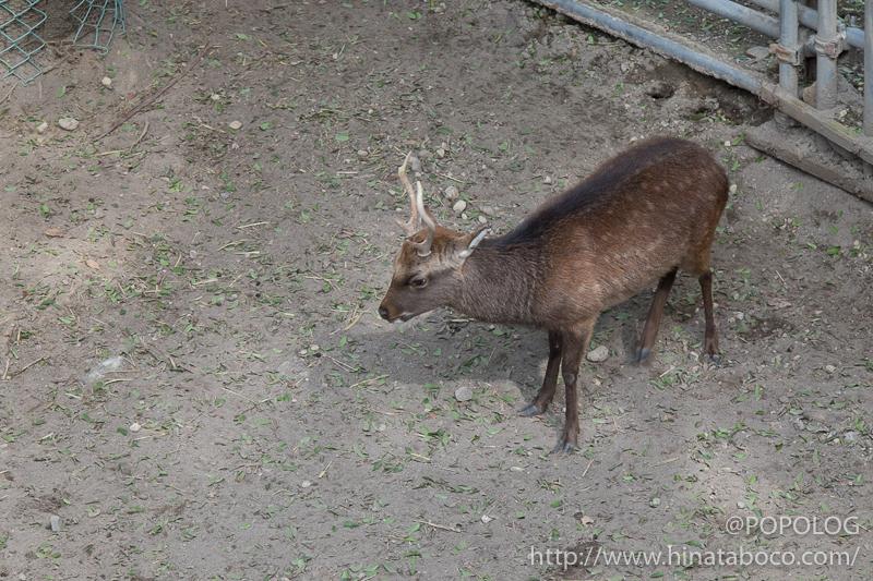 懐古園の鹿