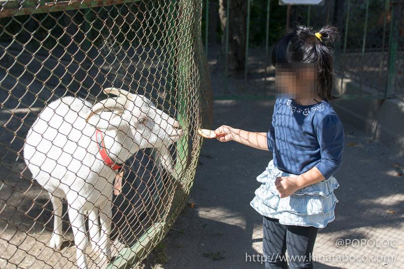 山羊に餌やり体験