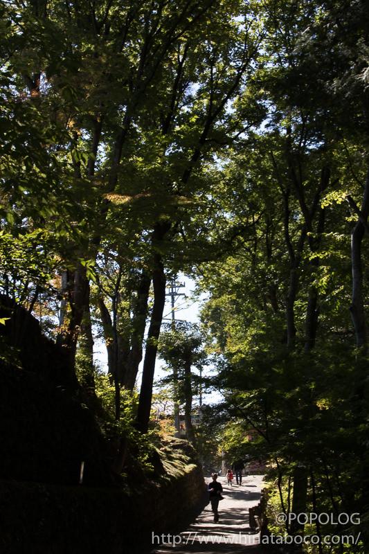 懐古園の木々