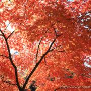 上田城公園の紅葉