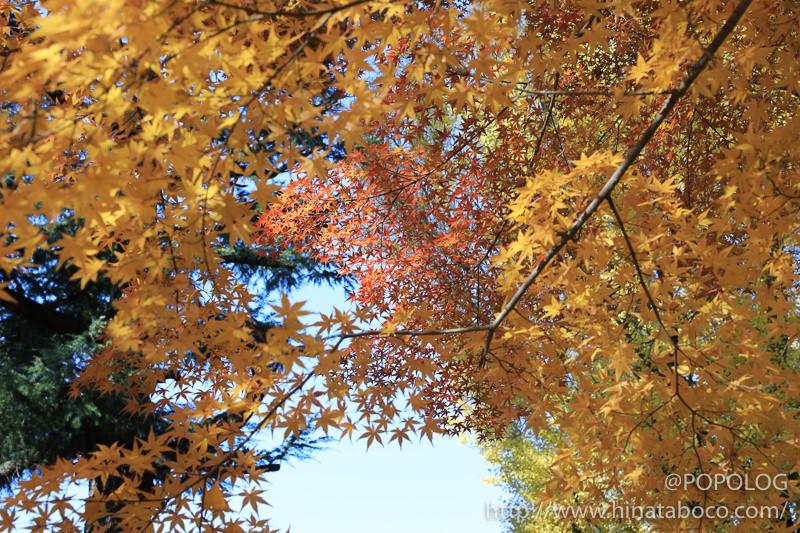 上田城の本丸跡の紅葉