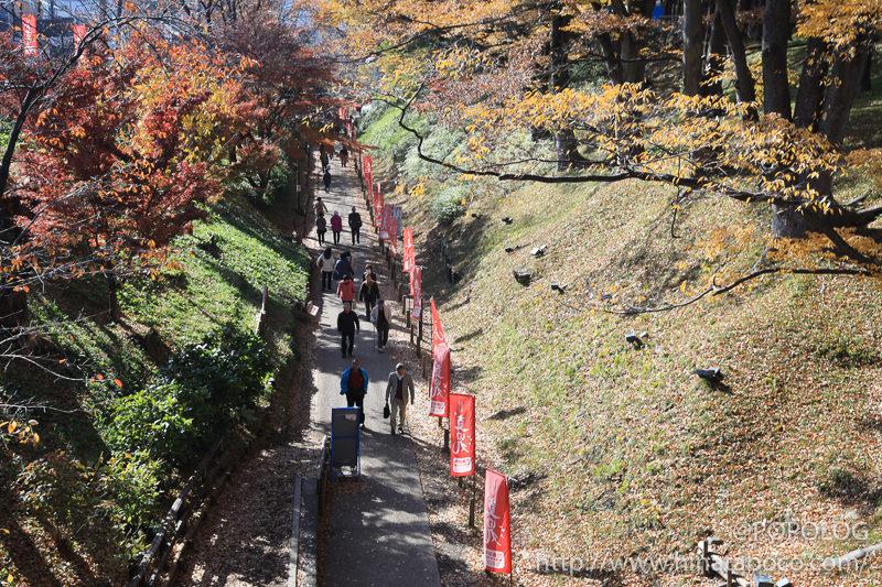 上田城公園のケヤキ並木街歩道