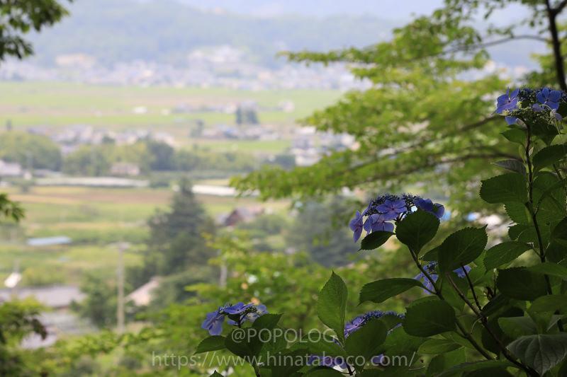 長野県のあじさいの名所「あじさい小道」を散策 in 長野県上田市