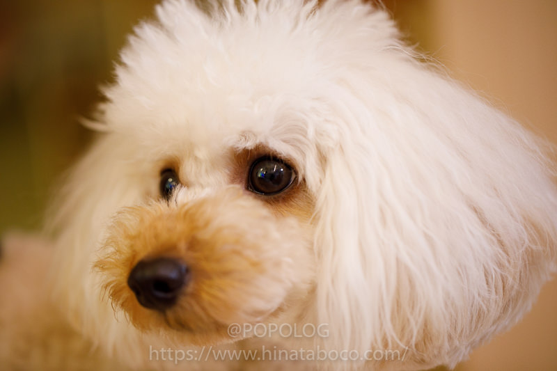犬の写真を撮るなら「ピントを目に合わせる」と生き生きとする