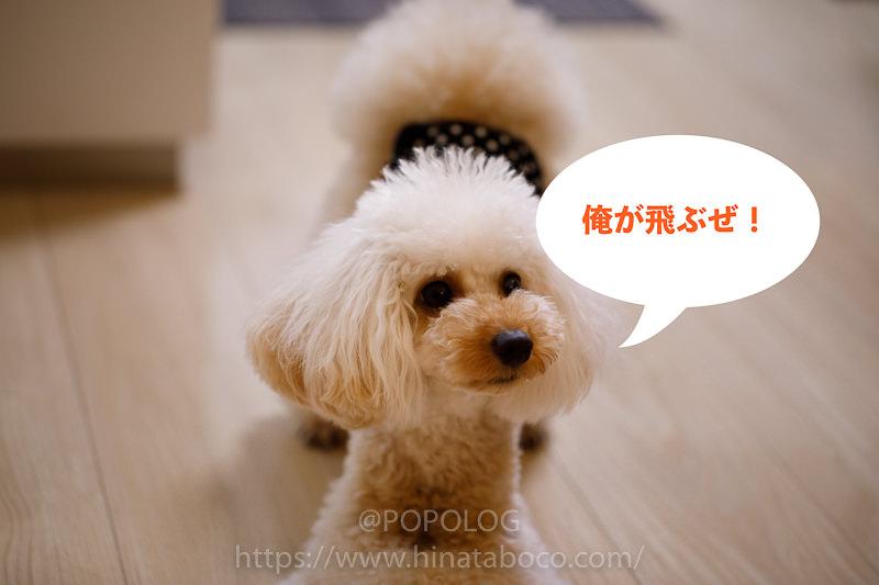 今、話題の飛行犬の撮影にチャレンジ!失敗して分かったこと