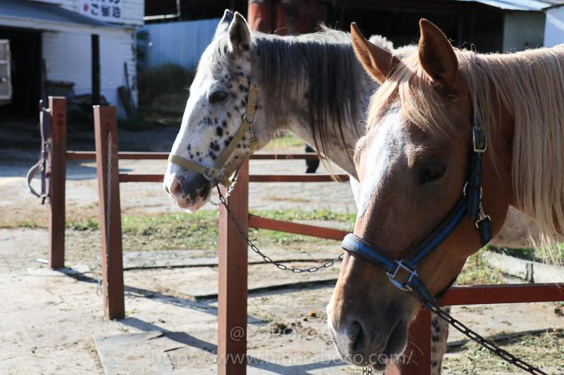 スエトシ牧場の乗馬をEOS M6で撮影