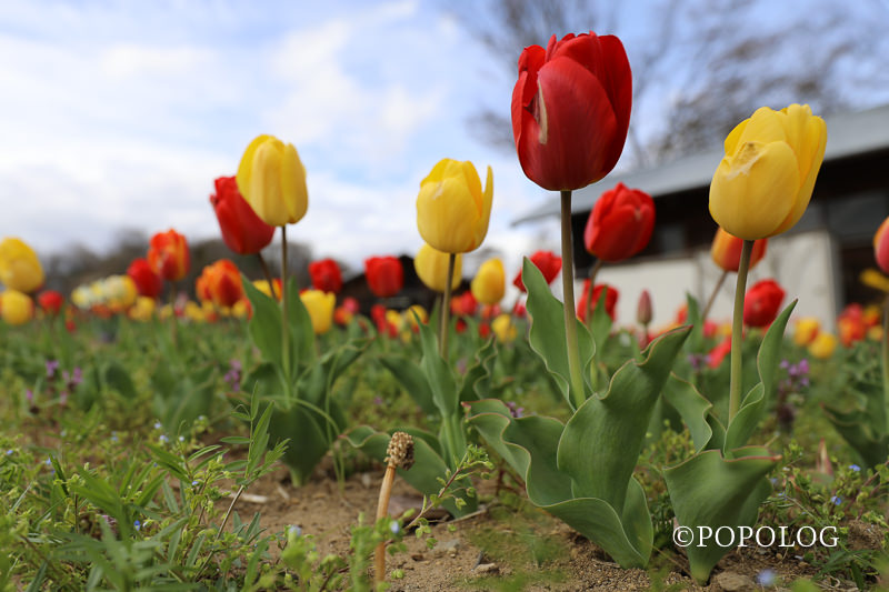 マクロレンズで春を切り取る!マクロ撮影だけ出なく常用レンズとしても使える面白いレンズ