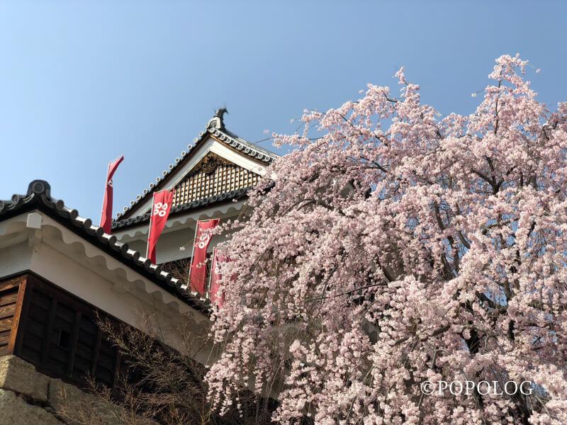 上田城のしだれ桜